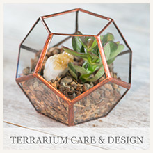 Terrarium Care and Design