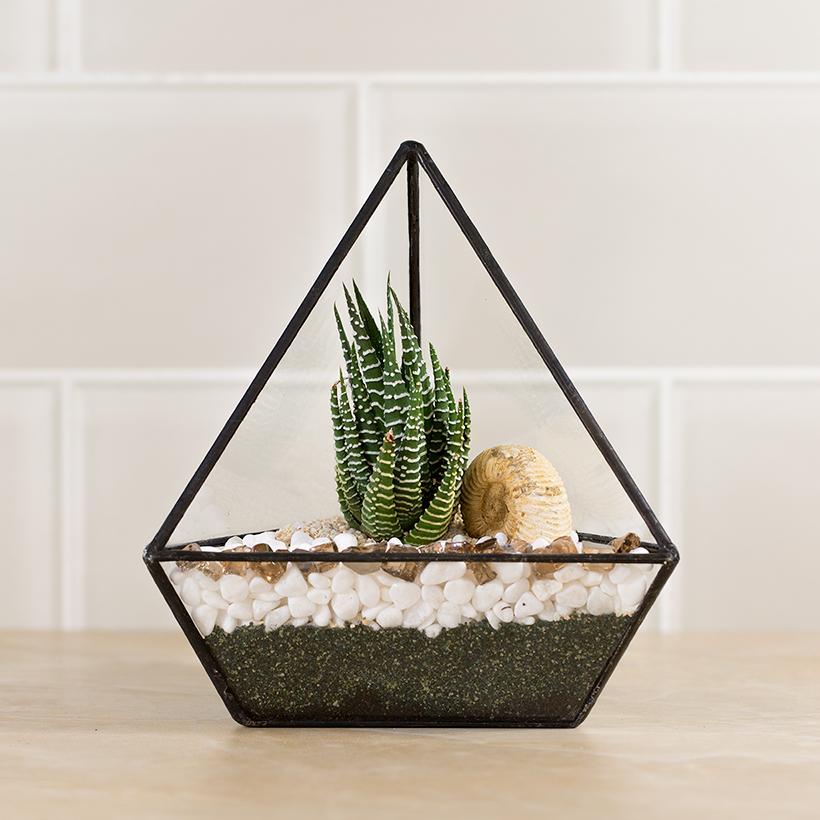 Triangle Terrarium (Black, Small)